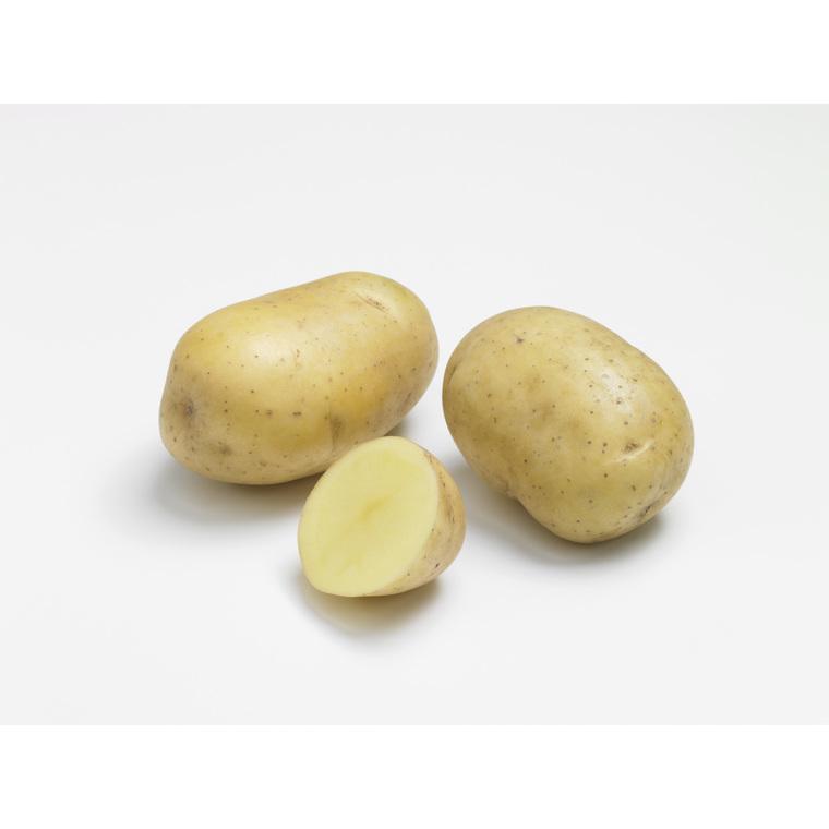Pommes de terre Primlady bio calibre 0001, 60 plants 322765