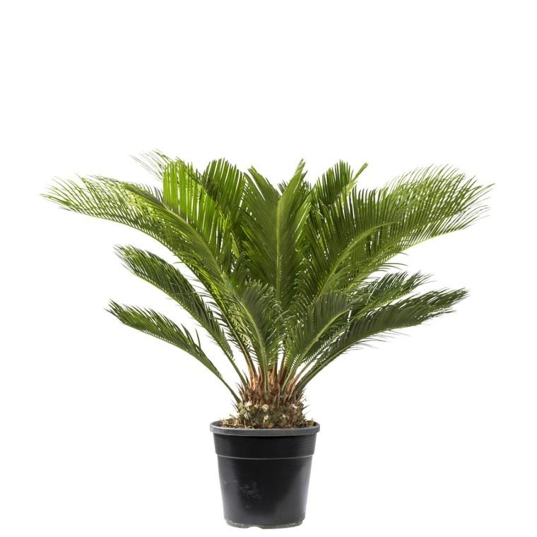 Faux palmier 351422
