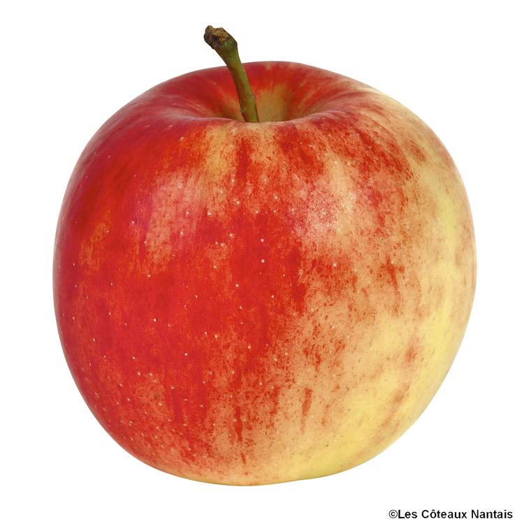 Pomme Jonagold - Prix au kg 37679
