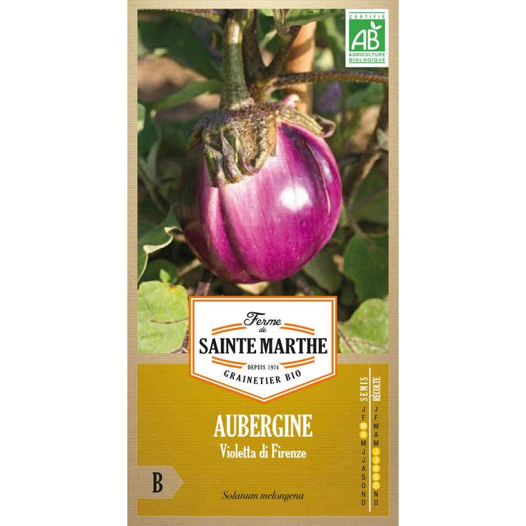 Aubergine Violetta di Firenze 382714