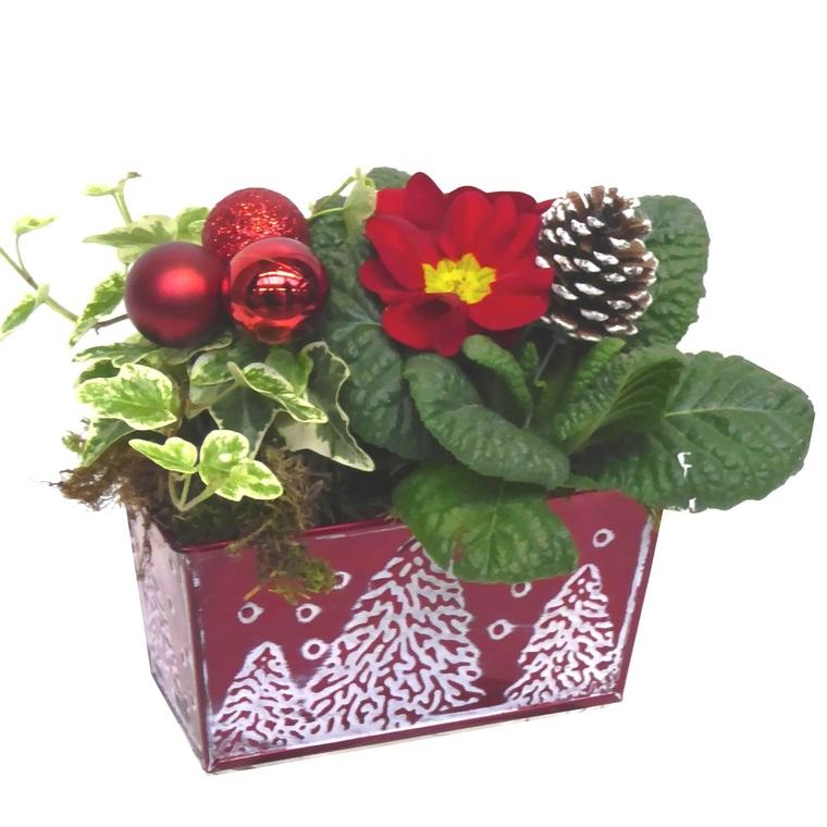 Compositionde Noël primevère jardinette. La composition 384823