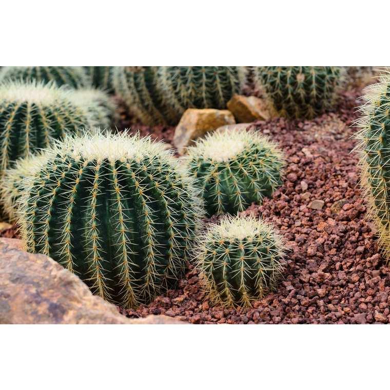 Terre de plantation cactées et plantes grasses 15 L 386906