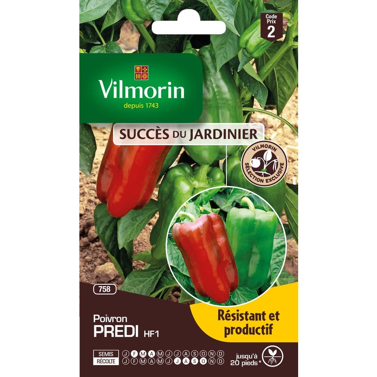 Semences pour poivron hybride de la variété predi – 2 m