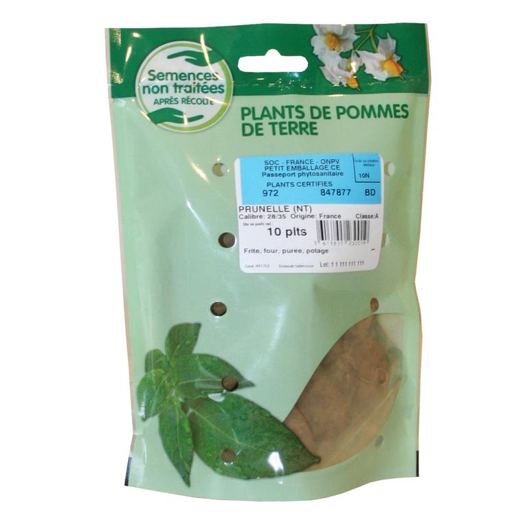 10 plants de pommes de terre prunelle calibre 28 à 35