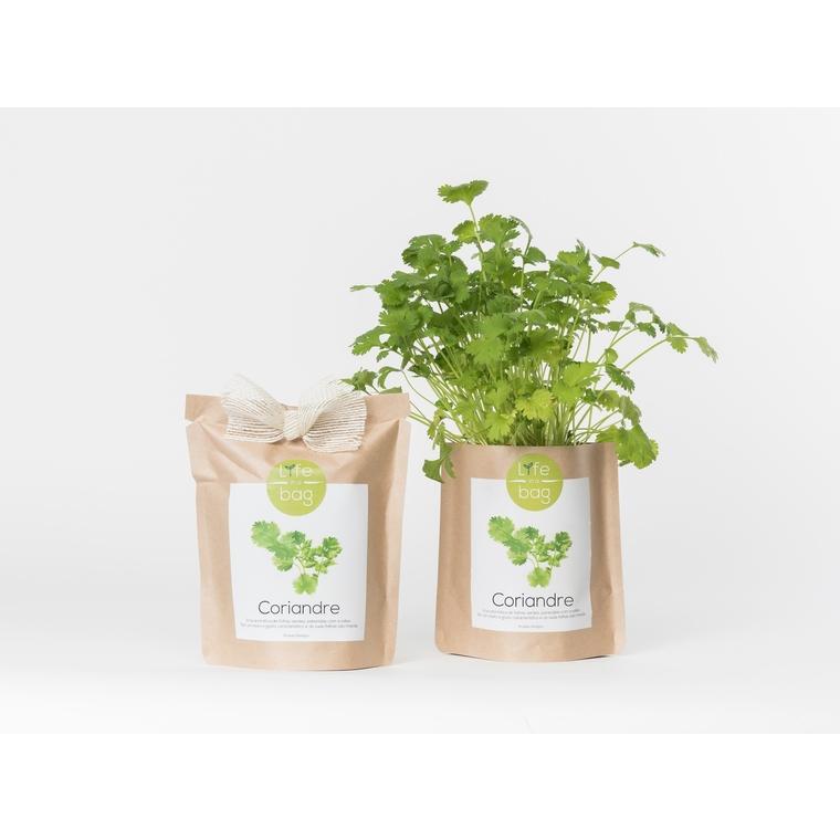 Grow bag de coriandre bio 300 g