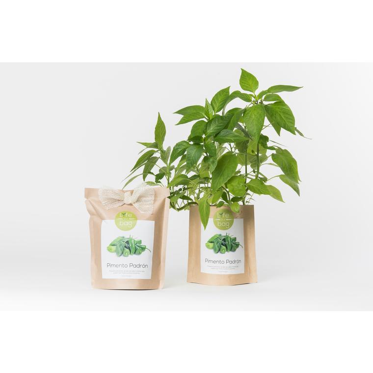 Grow bag de pimento padron bio 300 g