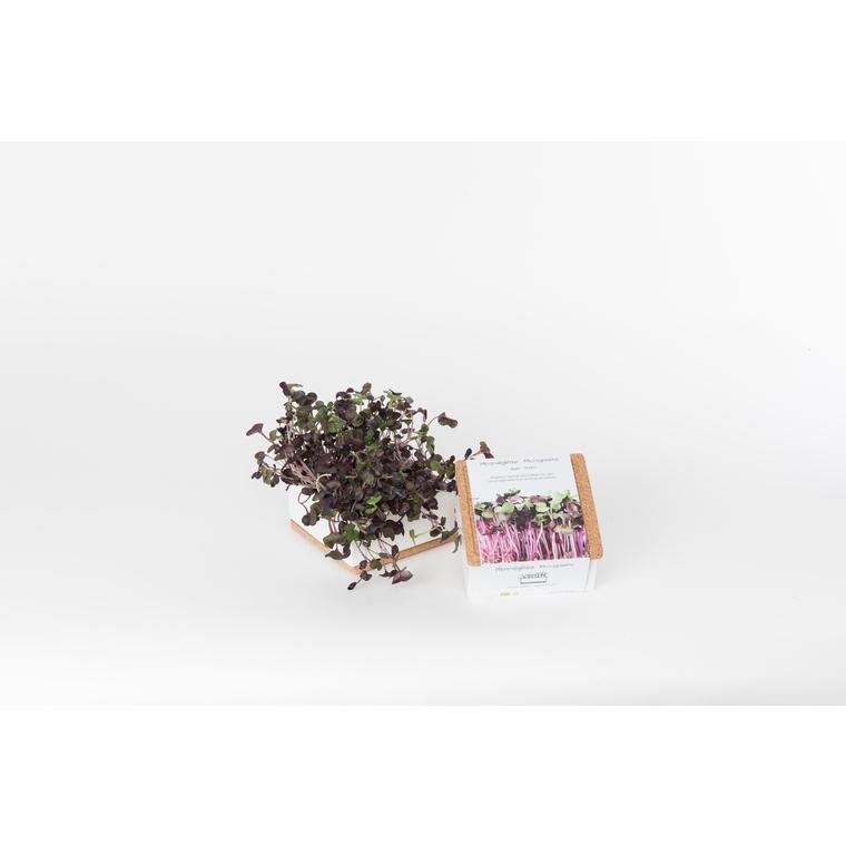 Grow box de radis bio 350 g