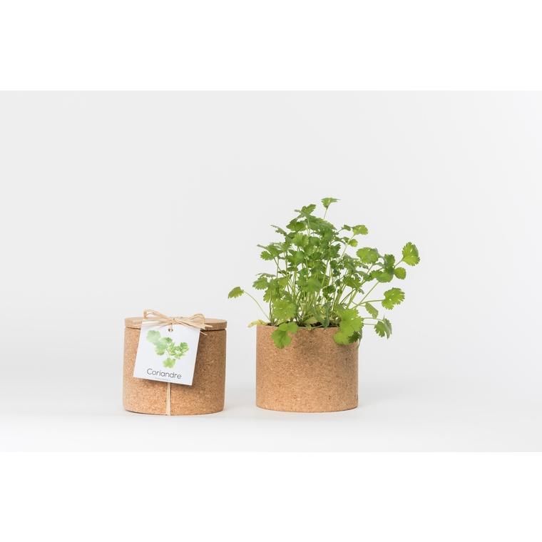 Grow cork de coriandre bio 450 g