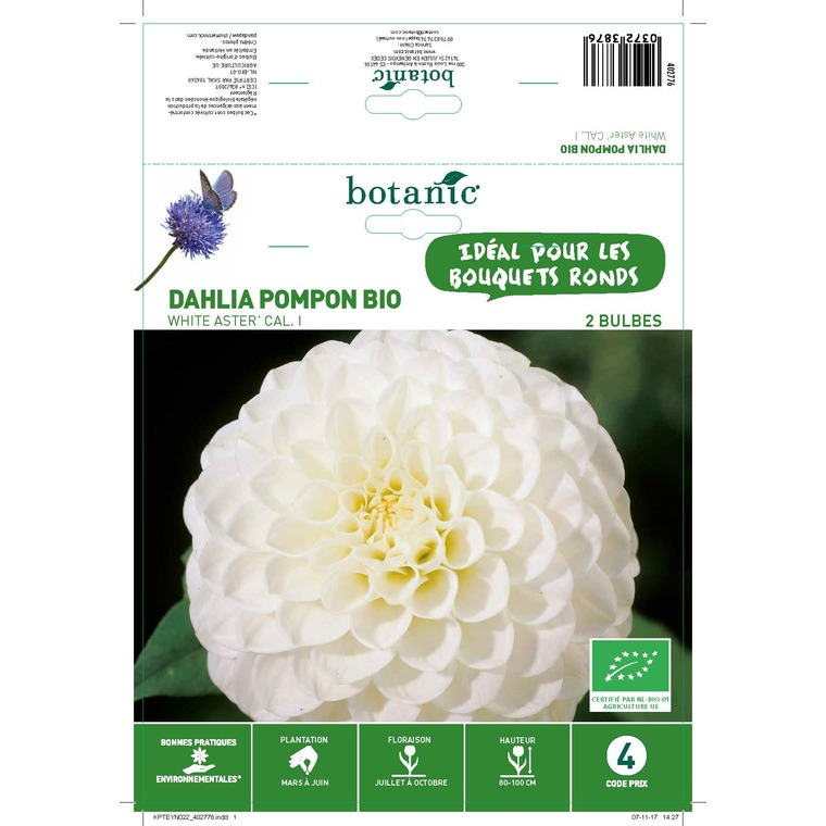 Dahlia pompon white aster bio 2 bulbes de calibre 1 – 4 m