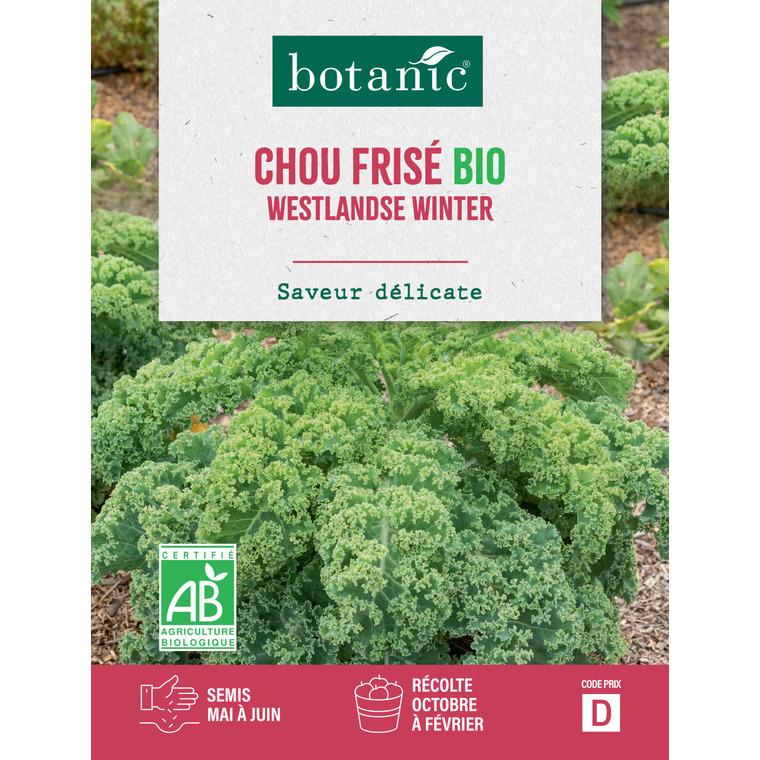 Graines de Chou kale westlandse winter bio en sachet