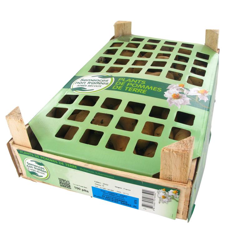 Pommes de terre Monalisa calibre 28/35, 100 plants