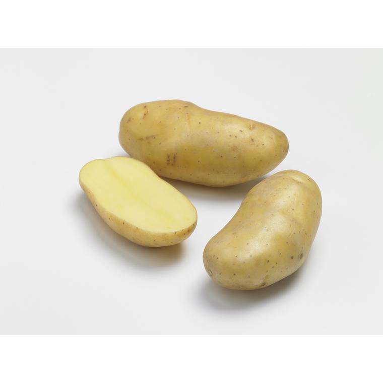 Pommes de terre Delikatesse calibre 25/32, 10 plants