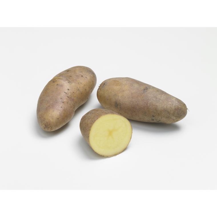 Pommes de terre Belle de Fontenay calibre 25/32, demi-germées