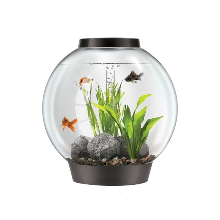 Poisson pour aquarium boule for Ou placer aquarium poisson rouge