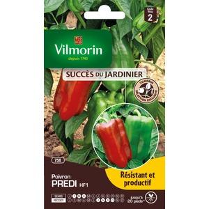 Semences pour poivron hybride de la variété predi - 2 m 400161