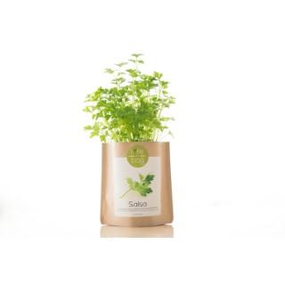 Grow bag de persil bio 300 g