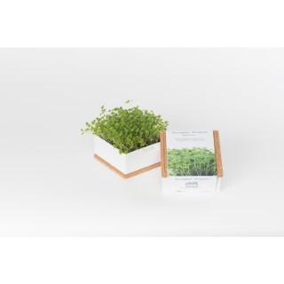 Grow box de roquette bio 350 g