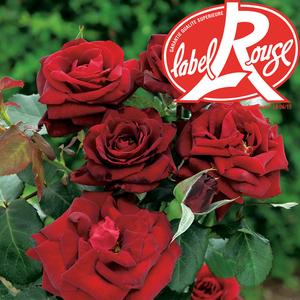 Rosier Bertrand Amoussou® Label Rouge en pot de 5L 402796