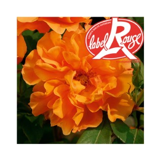 Rosier Tequila® Label Rouge en pot de 5L