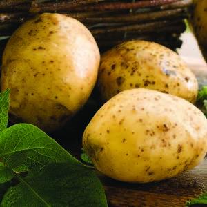 Pomme de terre Monalisa bio. Le pot de 1 litre recyclé