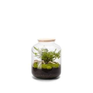 Terrarium Bonbonne S en verre transparent Ø 25 x H 31 cm