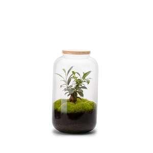 Terrarium Bonbonne M en verre transparent Ø 23 x H 41 cm