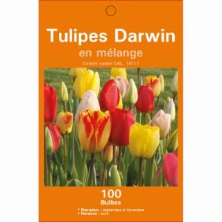 Mélange de bulbes tulipes darwin en 4 coloris botanic® x 100 414610