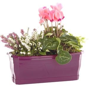 Jardinière d'extérieur avec plantes en mélange violet et rose 30 cm