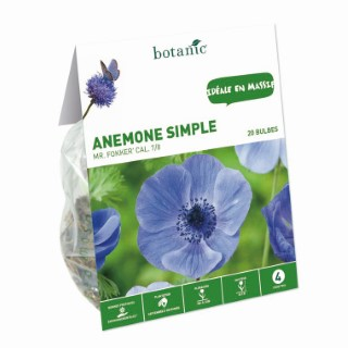 Bulbe anémone simple Mr. Fokker multicolore botanic® x 20 414778