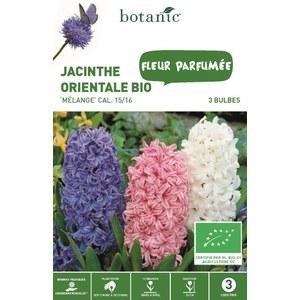 Bulbe jacinthe orientale en mélange bio multicolore botanic® x 3 414779