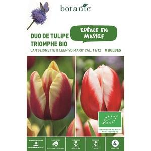 Bulbe duo tulipes triomphe jan Seignette & Leen vd Mar botanic® x 8 414780