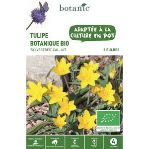 Bulbe tulipe botanique sylvestre jaune bio botanic® x 8 414782
