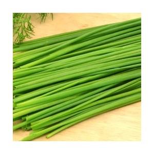La barquette de 6 plants