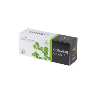 Lingot Coriandre Bio 415029