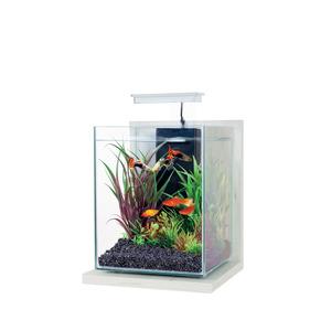 Kit d'aquarium jalaya ceruse blanc L 20 x l 20 x h 25 cm 419510