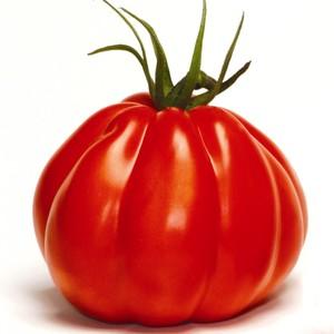 Tomate Coeur de Boeuf Corazon