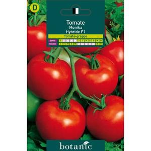 Tomate monika hybride