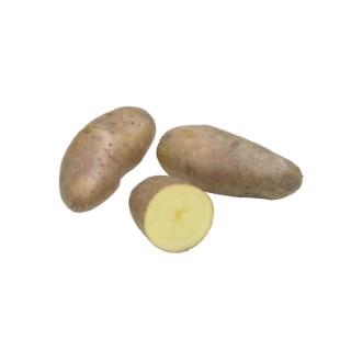 Pommes de terre Belle de Fontenay calibre 25/32, 25 plants