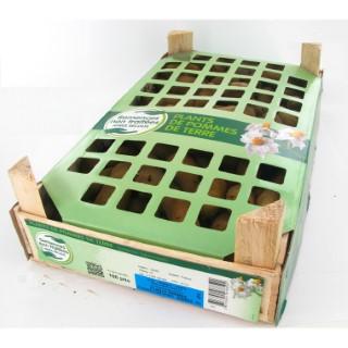 Pommes de terre Roseval calibre 25/32, 100 plants