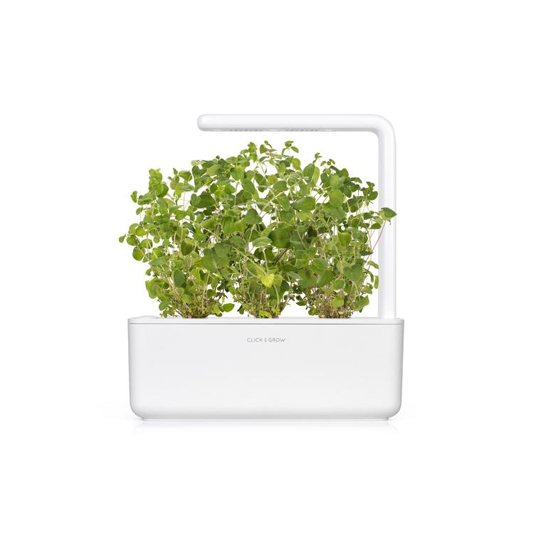 Lot de 3 recharges d'origan pour smart garden 402422
