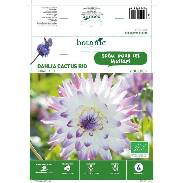 Dahlia cactus jura bio 2 bulbes de calibre 1 – 4 m 402773