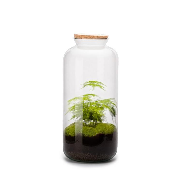 Terrarium Bonbonne L en verre transparent Ø 23 x H 51 cm 409606