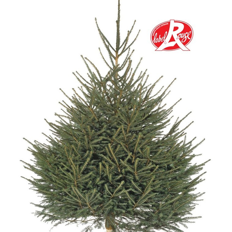 Sapin de Noël naturel coupé Picea Excelsa Label Rouge 125/150 cm 412797