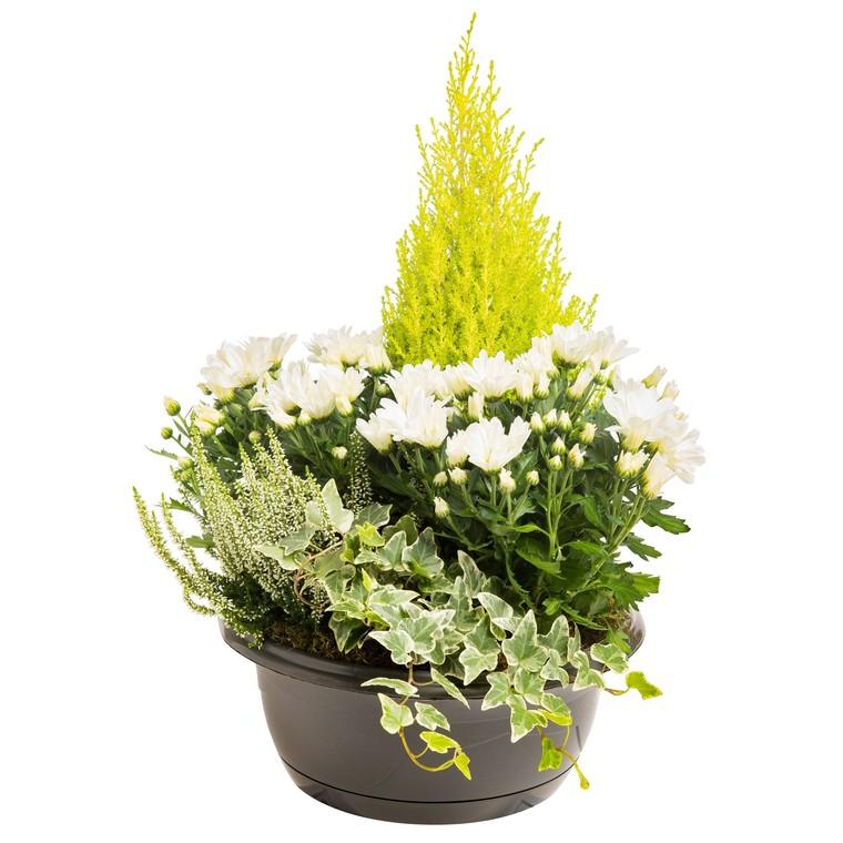 composition d'extérieur mélange blanc et vert. La coupe de 30 cm 413611