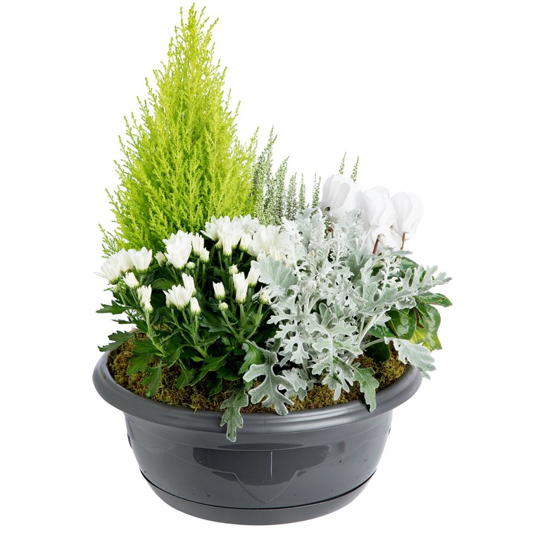 Composition d'extérieur mélange blanc et vert. La coupe de 40 cm 414728