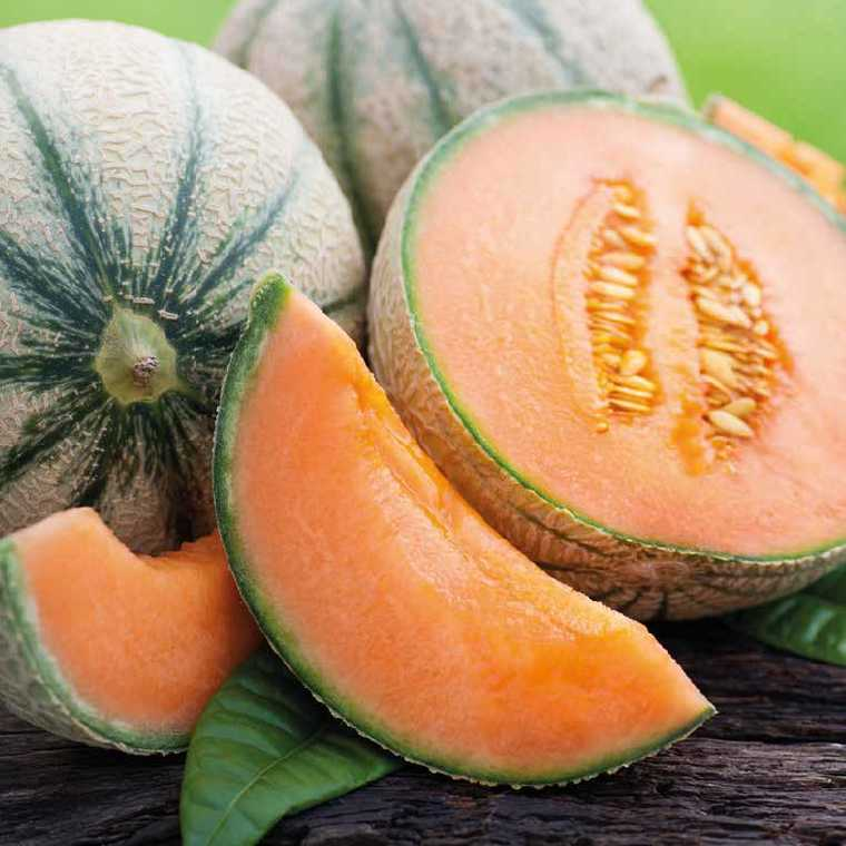 Melon Brodé Charentais Jenga Greffée bio. Le pot de 1 litre recyclé 41506
