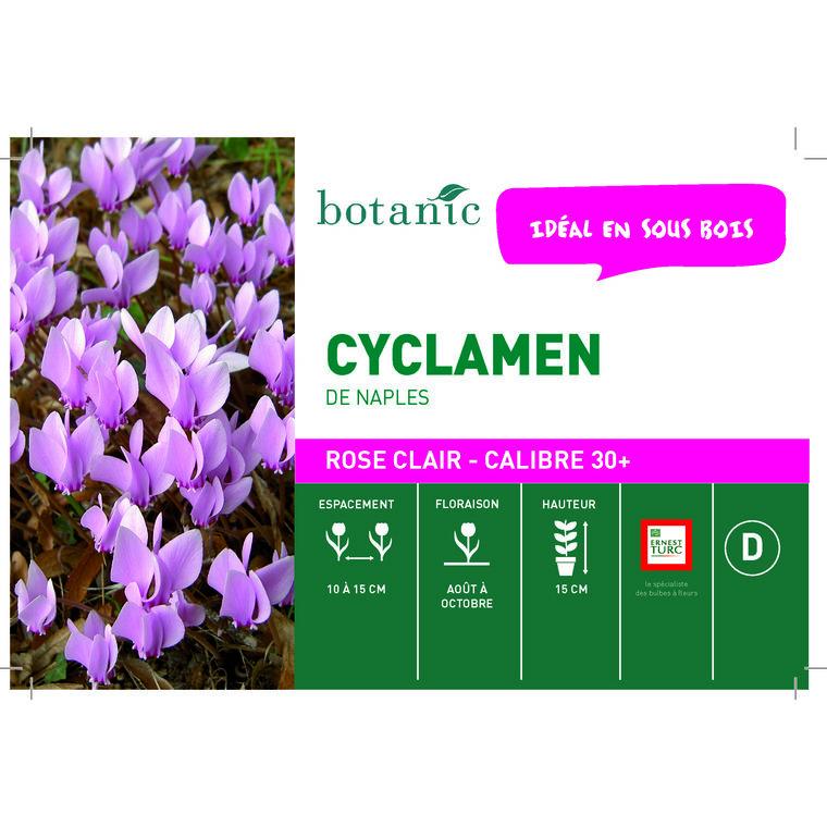 Bulbe cyclamen de Naples rose botanic® en vrac 431269