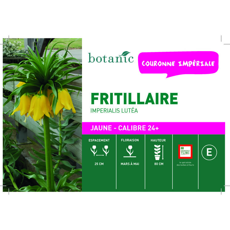 Bulbe fritillaire imperiale lutea jaune botanic® en vrac 431272