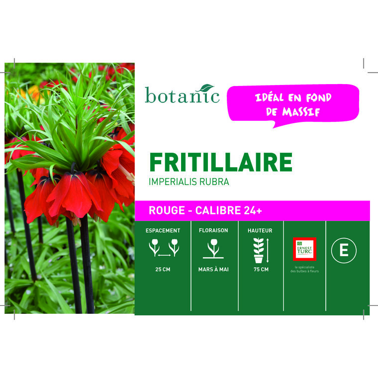 Bulbe fritillaire imperiale rubra rouge botanic® en vrac 431273