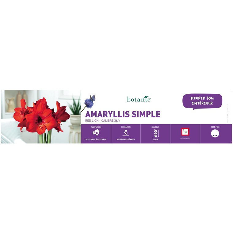 Amaryllis Red Lion 431312